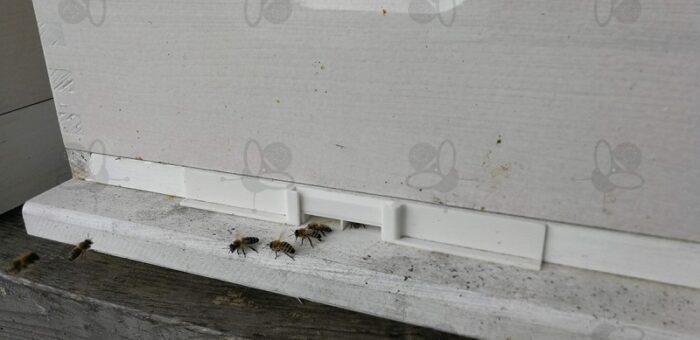 Čebelji rop je najbolje preprečiti s posebnim hodnikom proti plenilstvu