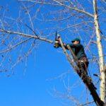 Različni načini obrezovanja dreves