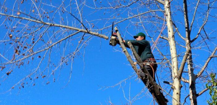 Obrezovanje dreves koristi za nadaljno rast in razvoj drevesa