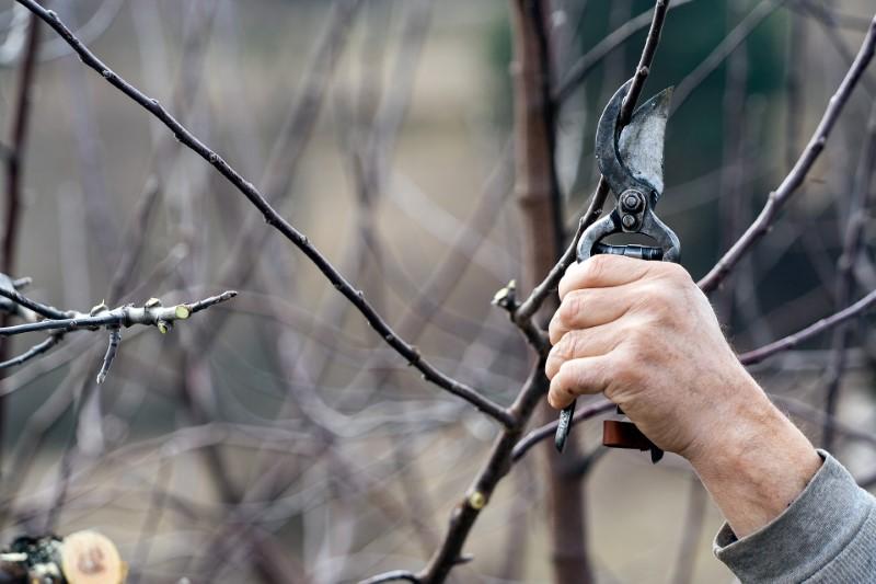 Obrezovanje dreves spomladi je zelo priporočljivo